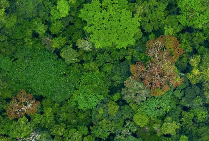 木 を 見 て 森 を 見 ず 意味